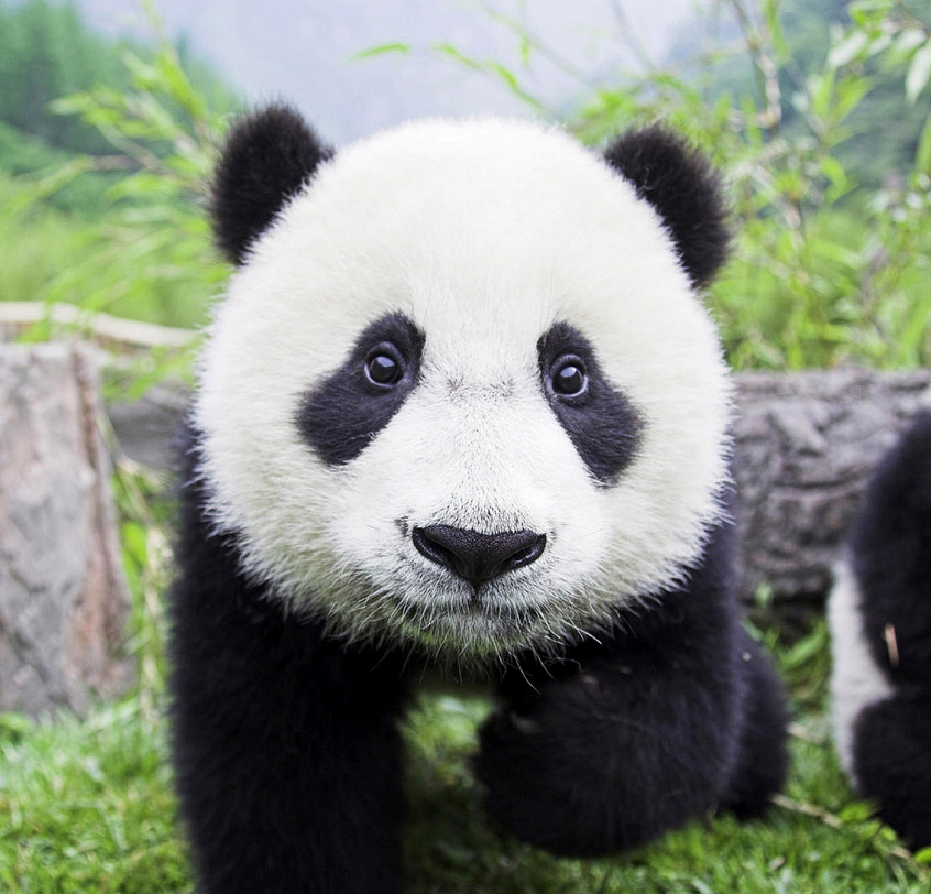 The Google Panda Patent Explained